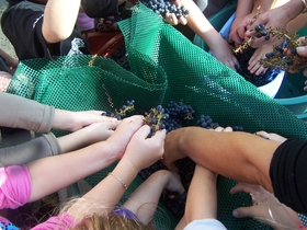 Oenotourisme - Tout sur la vigne pour les enfants et les parents, pour les groupes, english spoken