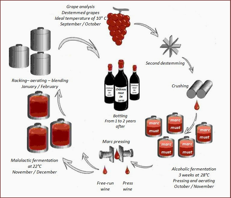 Vinification_red_wines_2